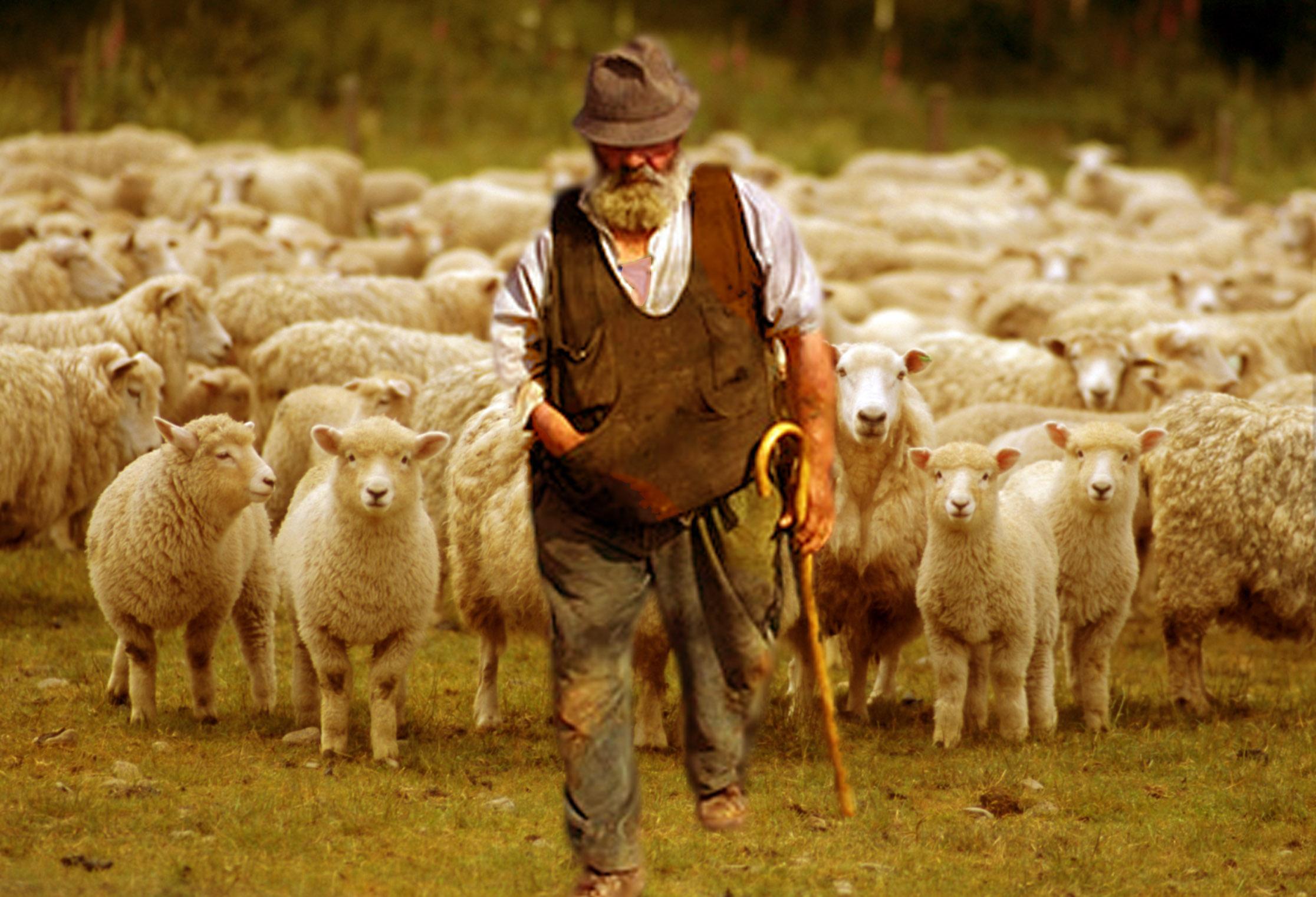 Il Signore come pastore